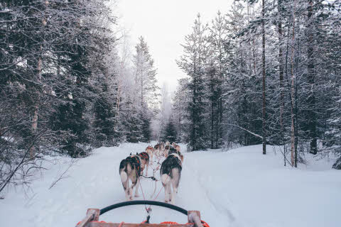 Santa Claus Village, Rovaniemi, Finland , Dog sled pulled by dogs