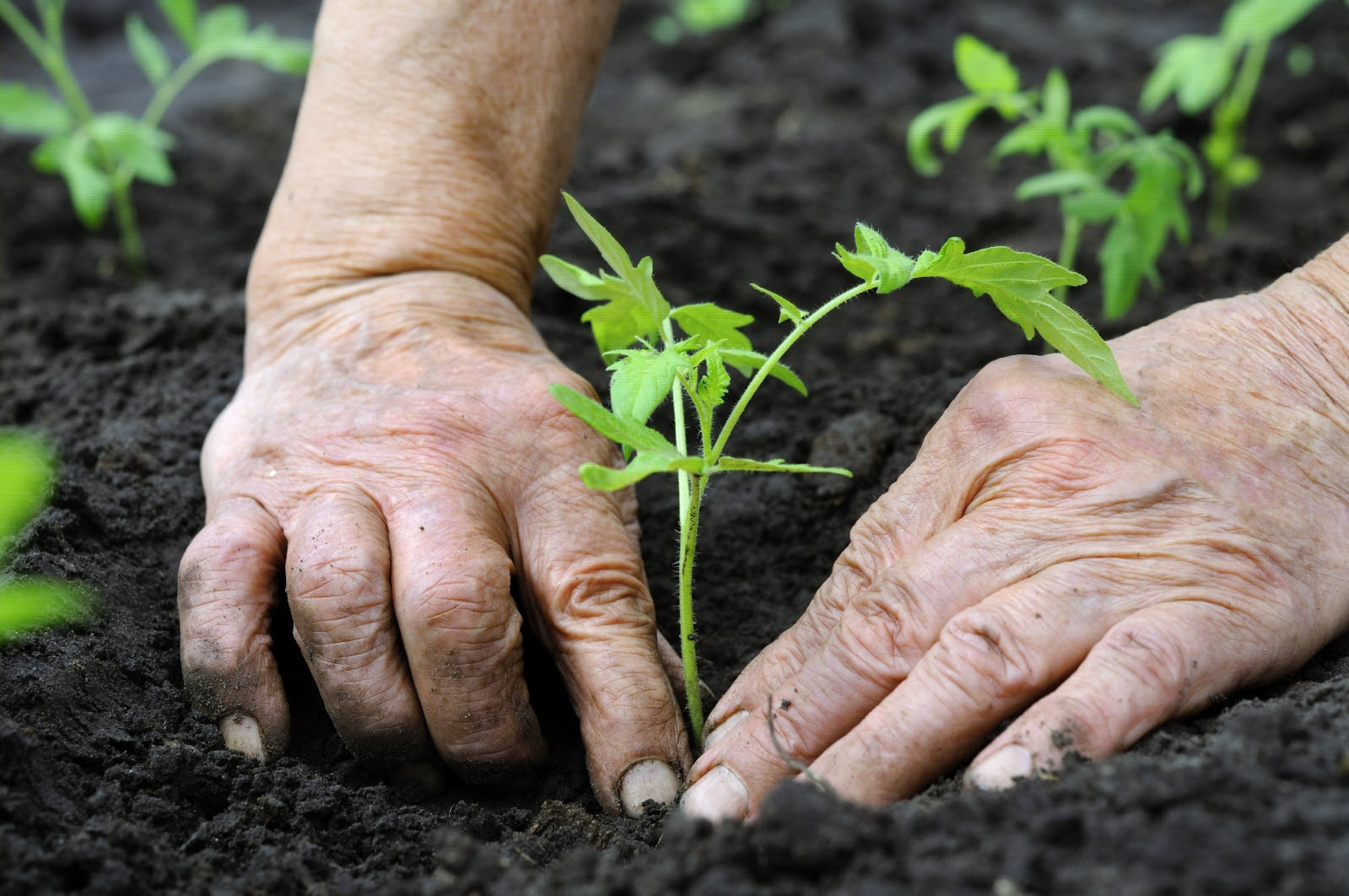 CSR, sustainability, planting, nature, grow, growth, investing, earth, soil, care